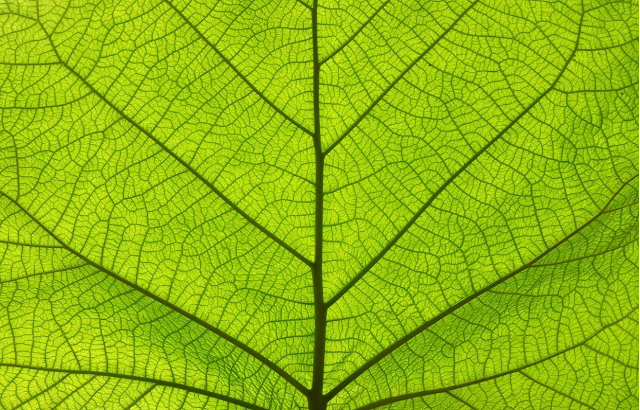 Leaf in close up